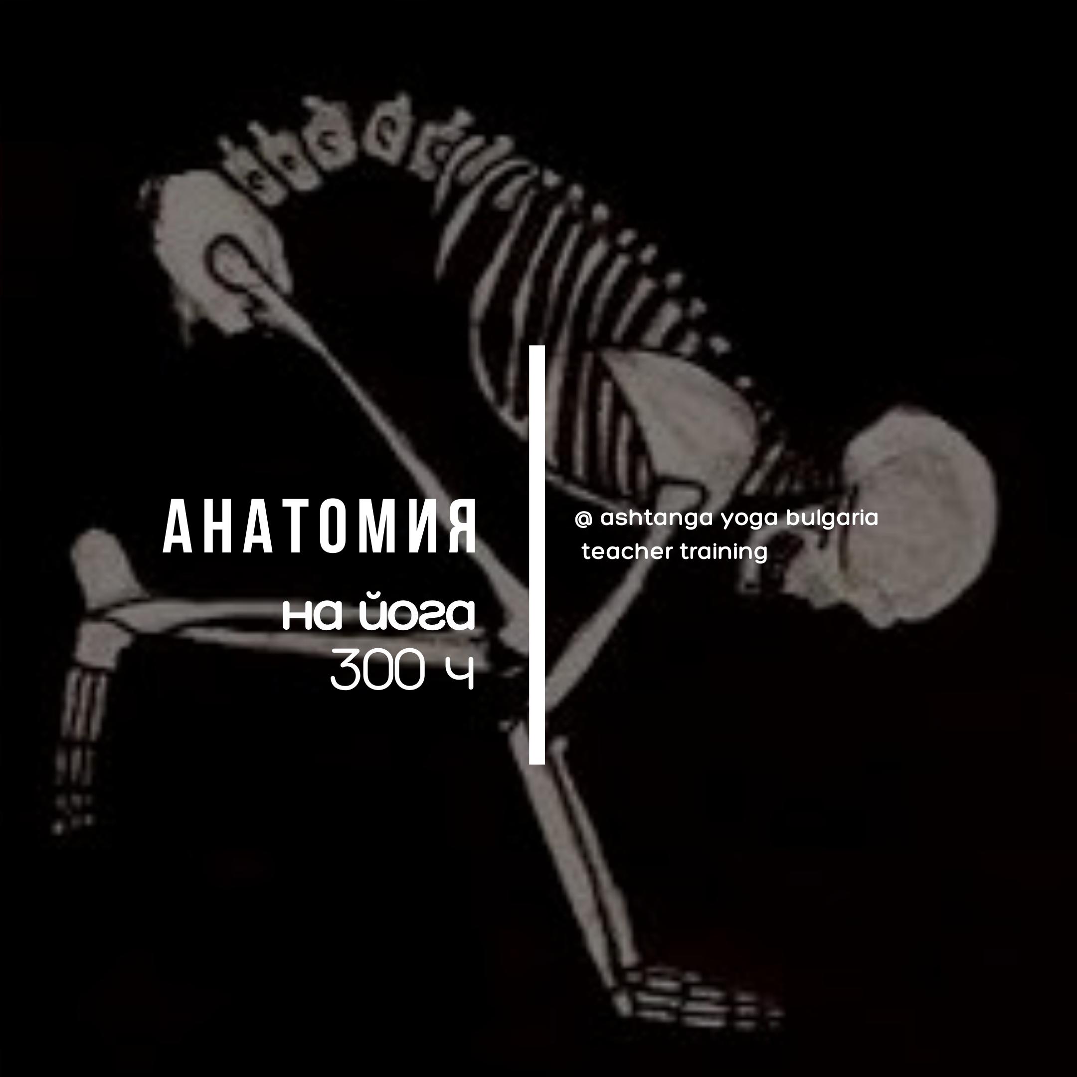 Anatomy TT 300