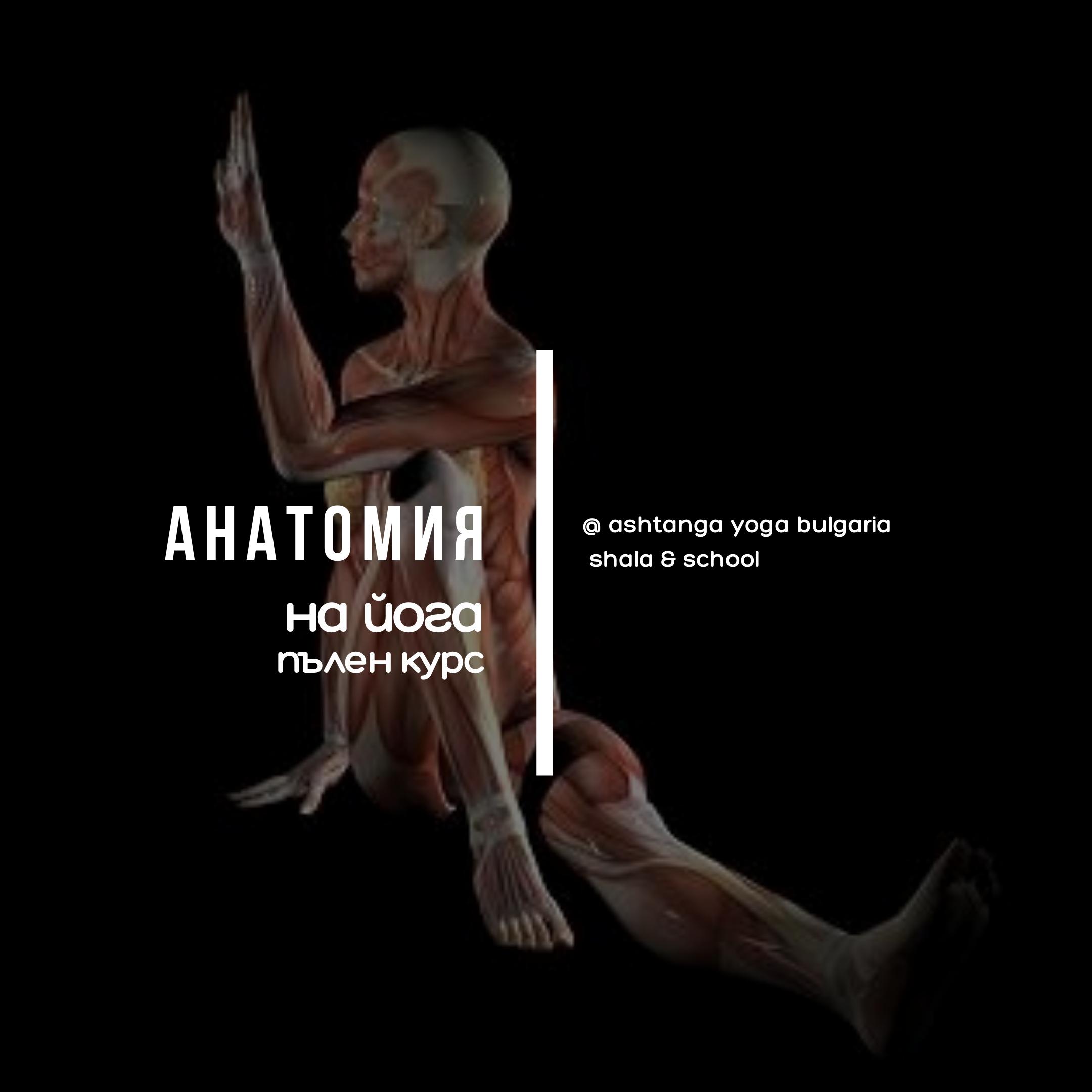 Anatomy Comprehensive