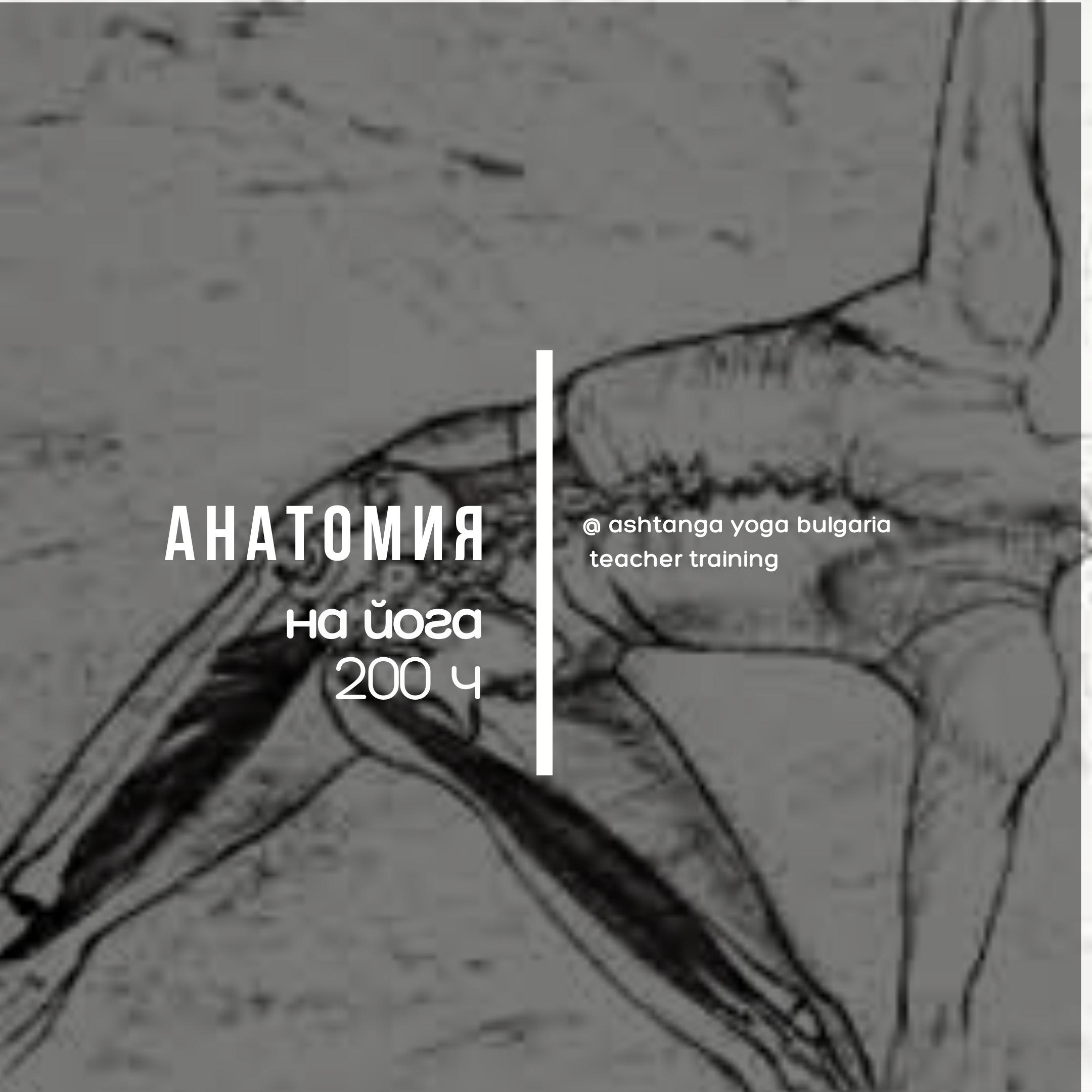Anatomy TT 200