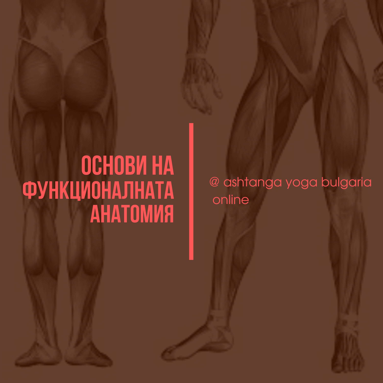 Basic anatomy Course